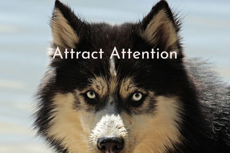 video-attract-attention